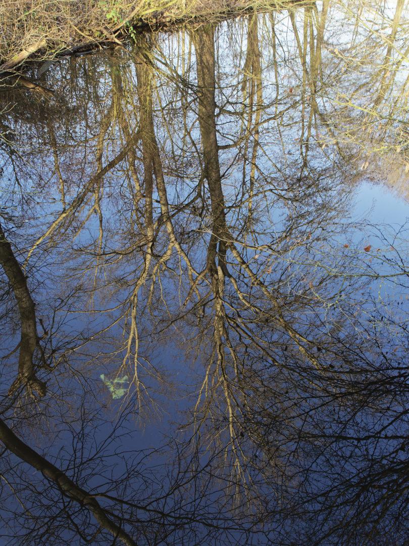boom gespiegeld in het water