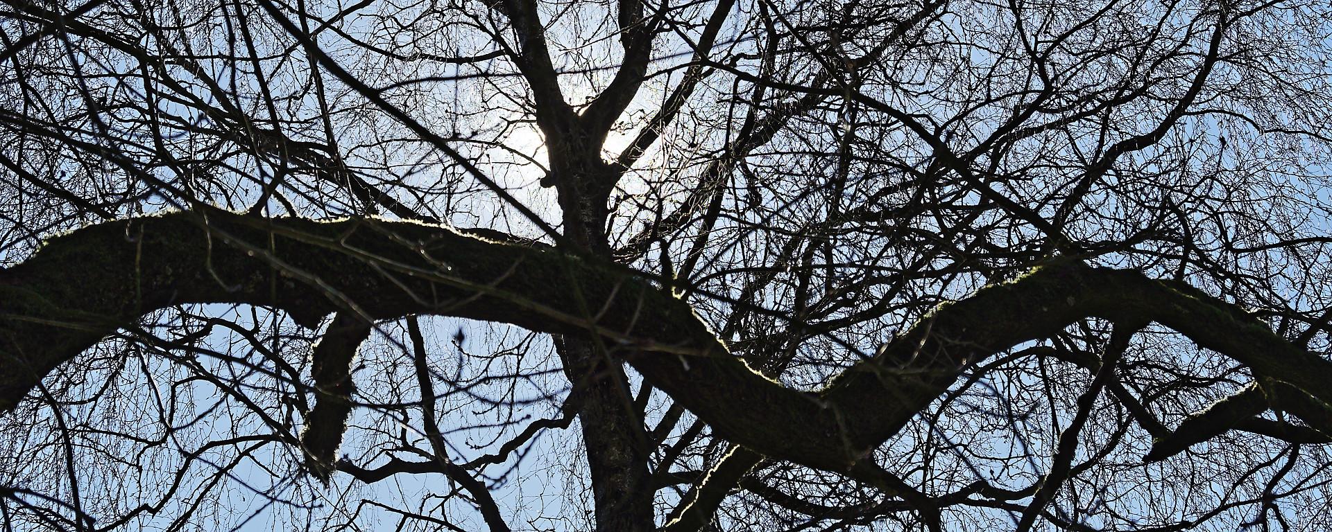 boom takken tegen een blauwe lucht