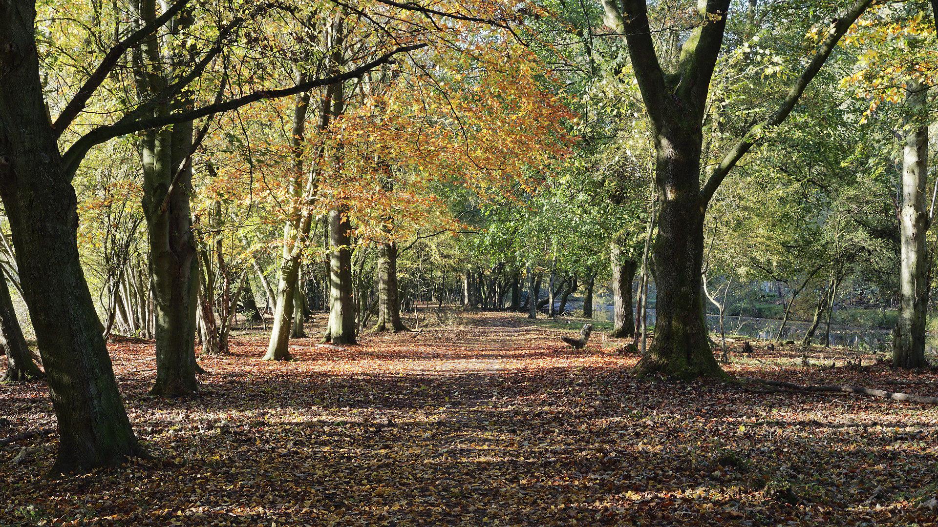 herfstbladeren, zon, bankje, brede boslaan