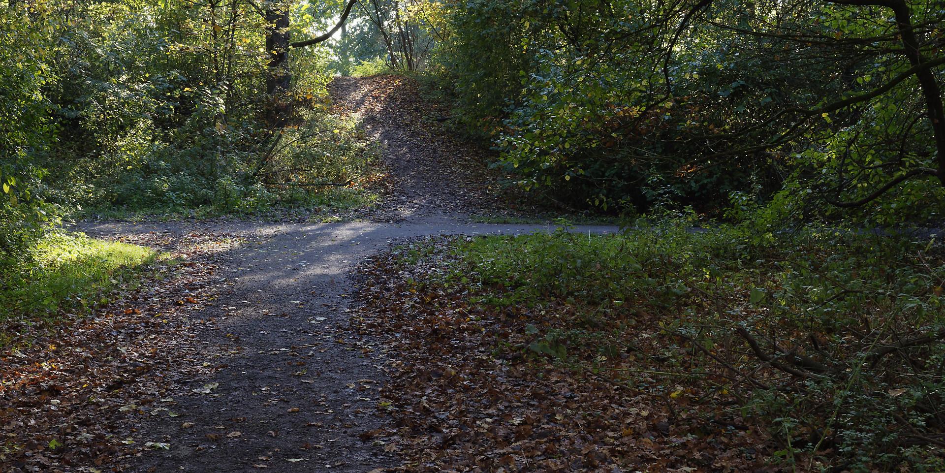 bospad en heuveltje, herfst en zon