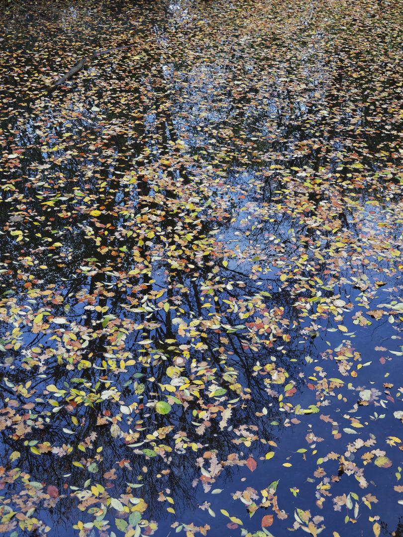 bladeren op water met blauwe lucht