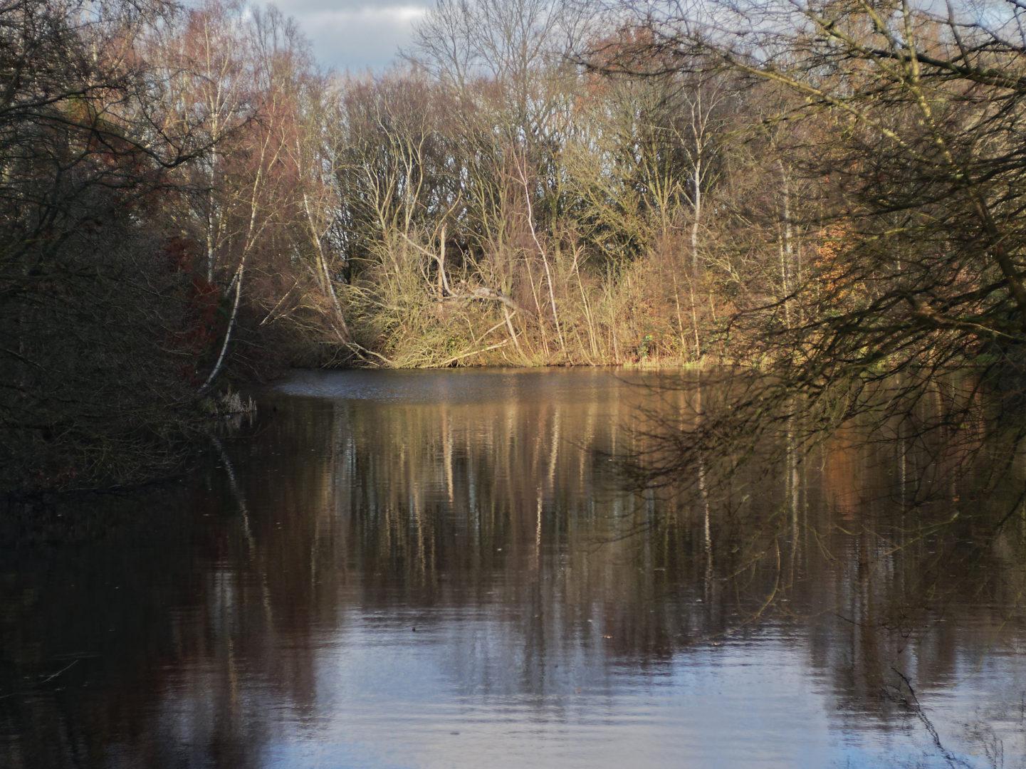 water en spiegeling van bomen