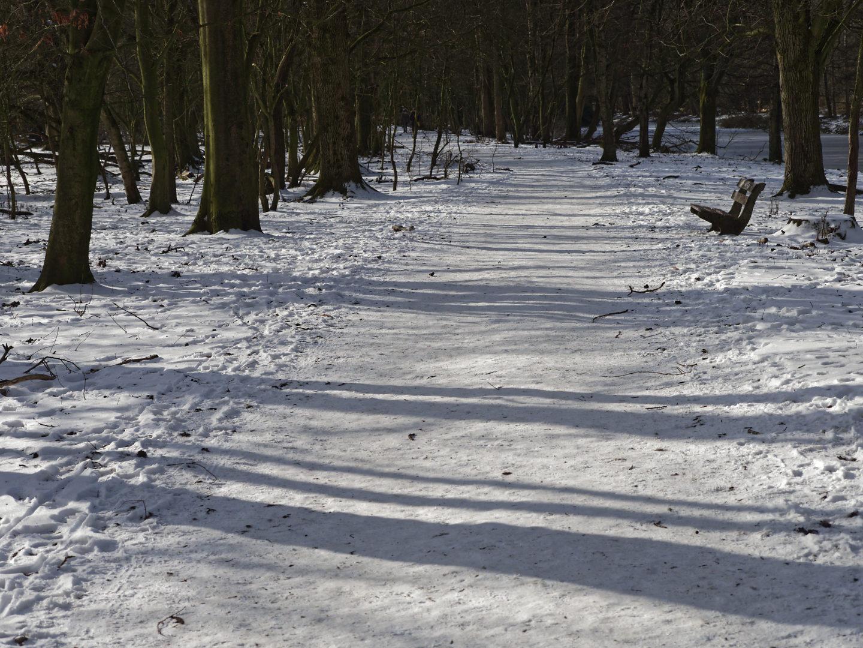 sneeuw, langs de koeiewei
