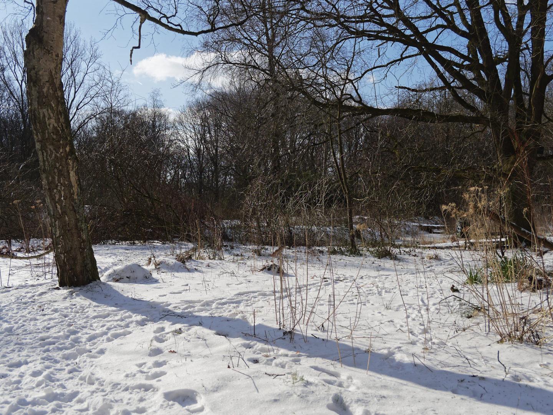 heemtuin Stadspark in sneeuw