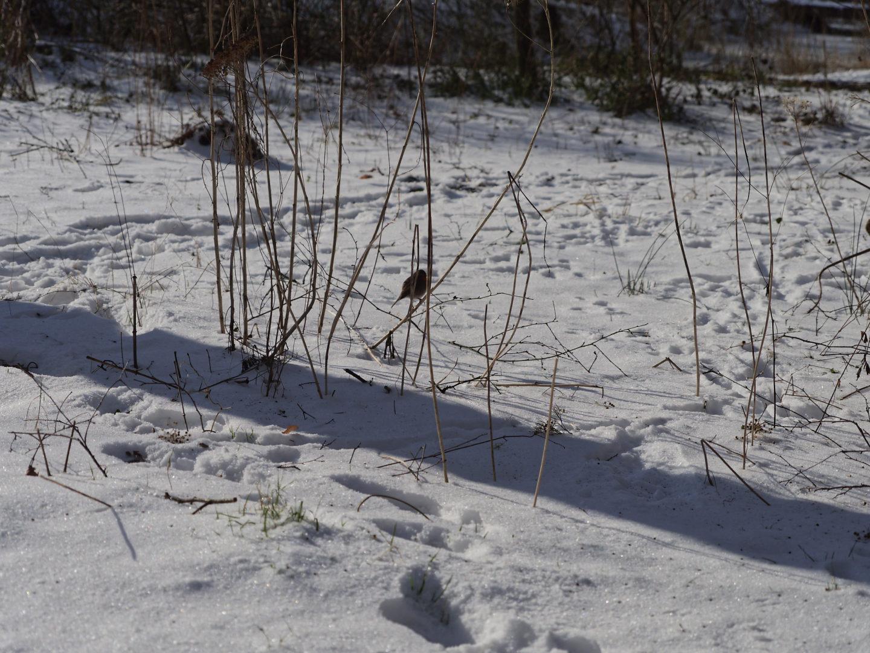 vogeltje en sneeuw