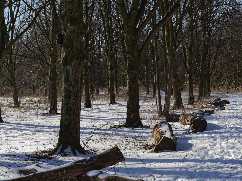 sneeuw en bomen en schaduwen