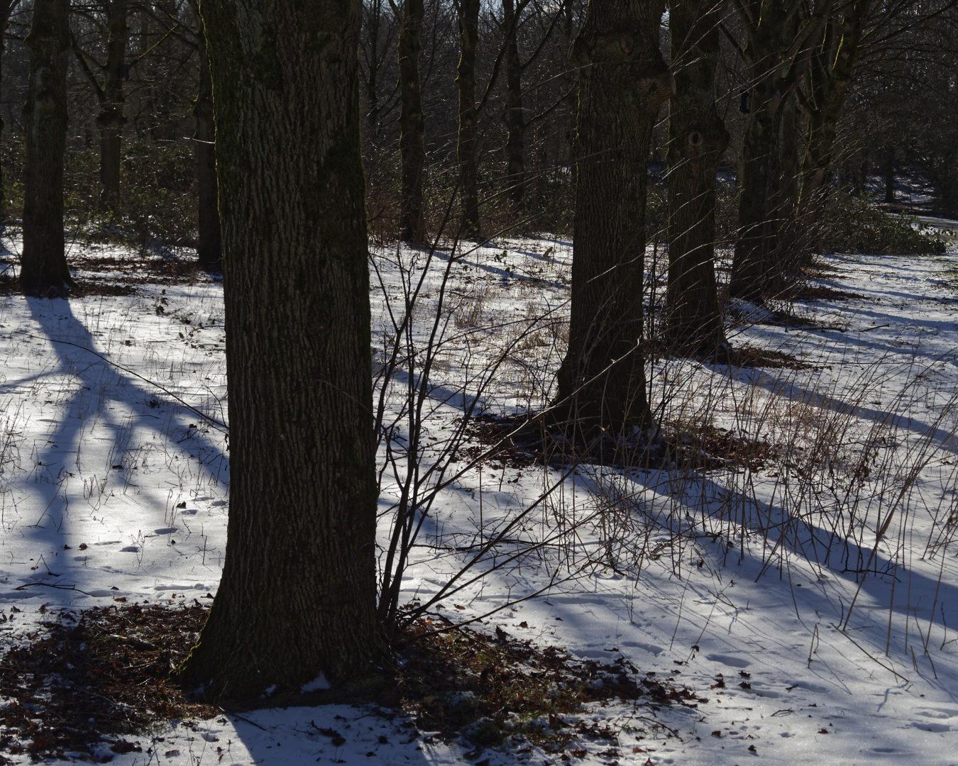 bomen, sneeuw, schaduw