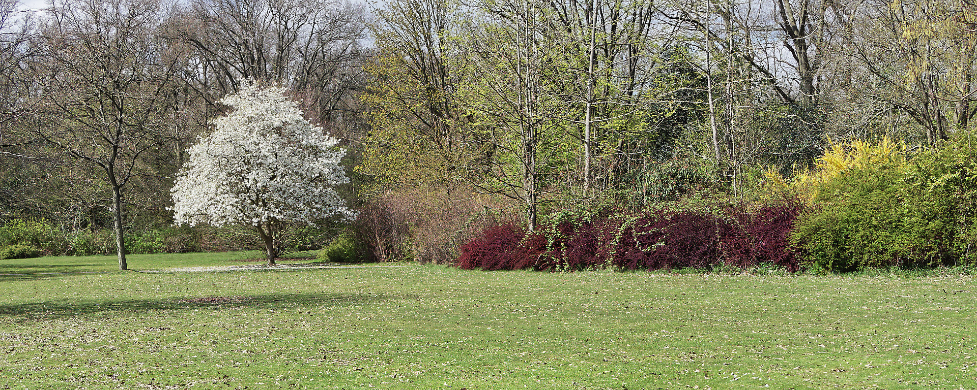 bomen en struiken in bloei