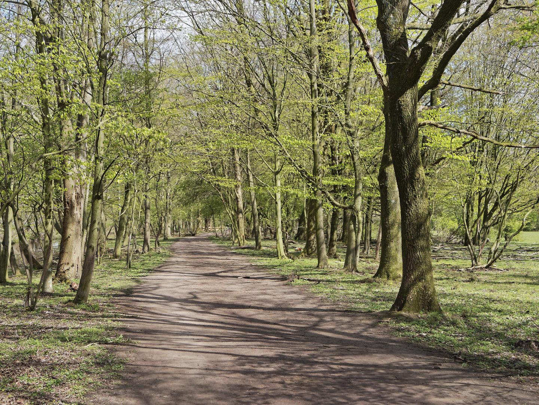 pad, schaduwen, voorjaar