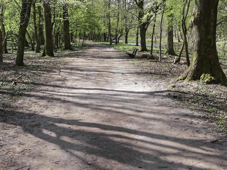 pad met bank in voorjaar