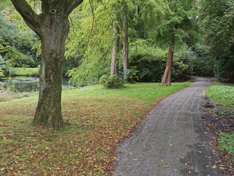 bomen en pad