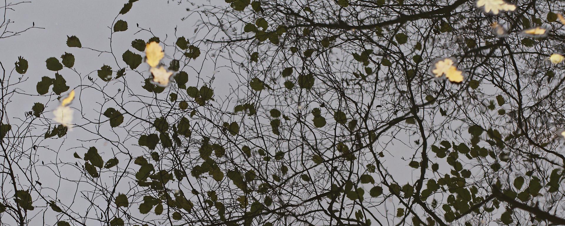 takken en bladeren gespiegeld in water