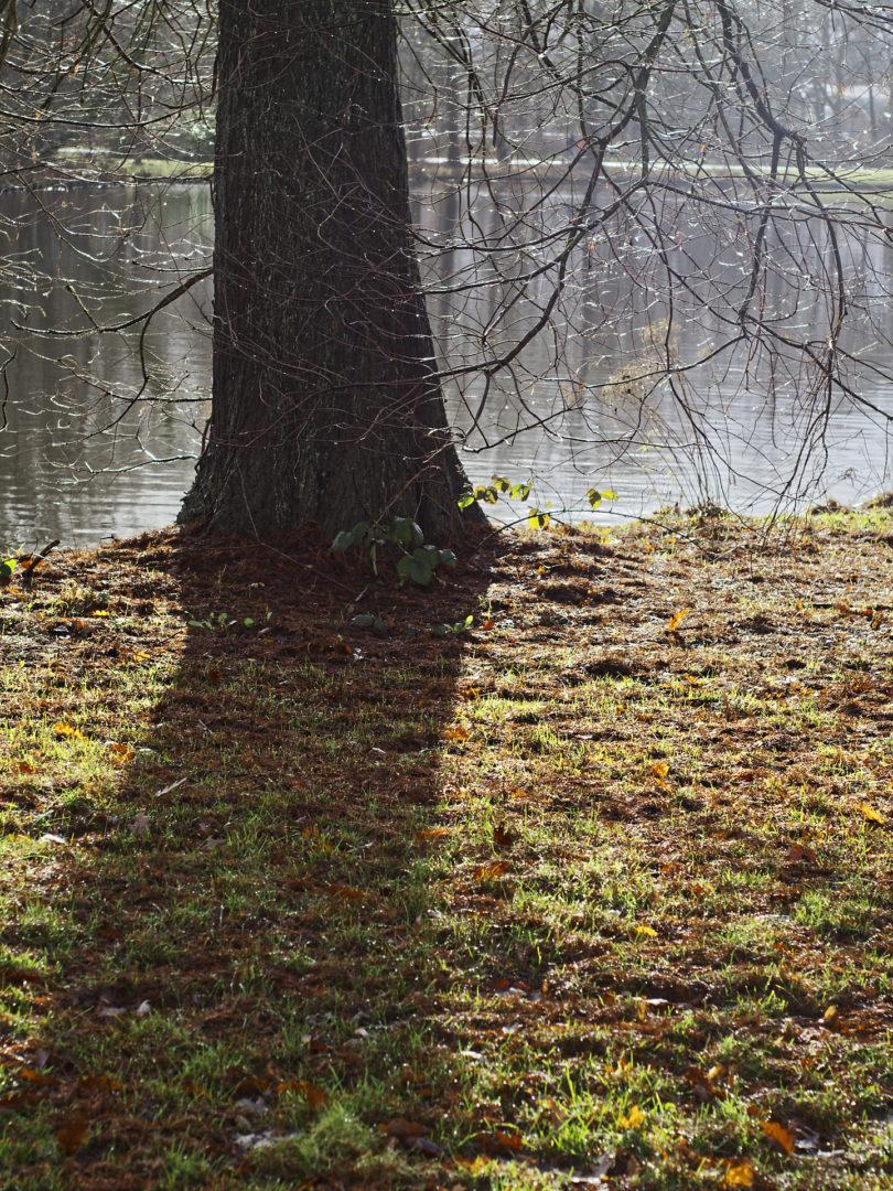 boom aan water