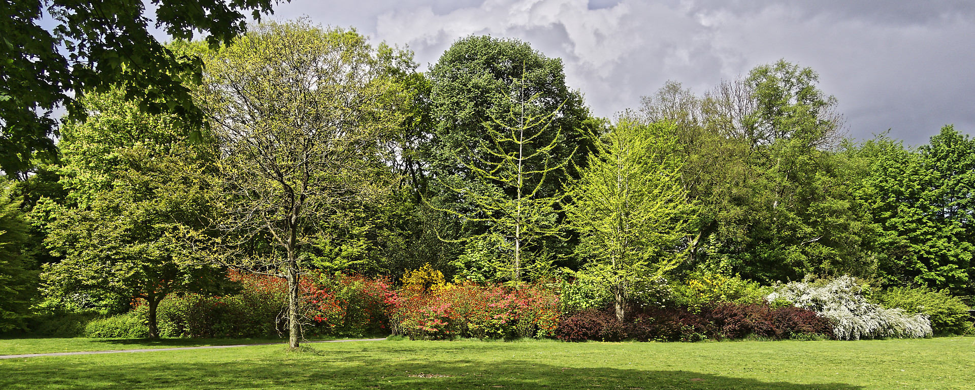 struiken en bomen in bloei