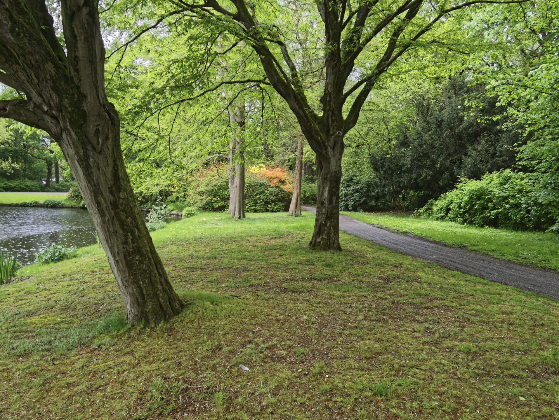 stadsparkvijver met bomen en pad
