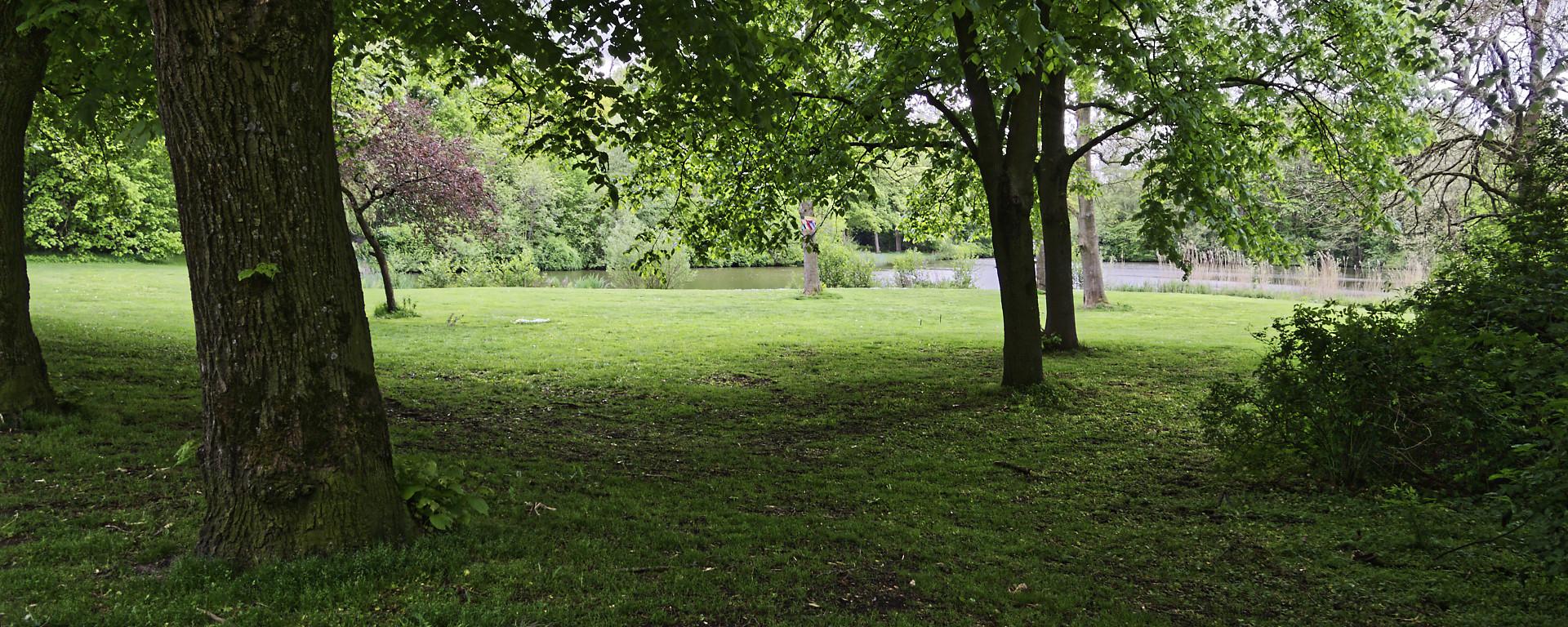 stadspark vijver met bomen en gras